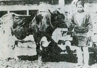 大正中期ごろに撮影されたとみられる福室軒牧場の貴重な写真(上落合郷土史研究会『昔ばなし』)
